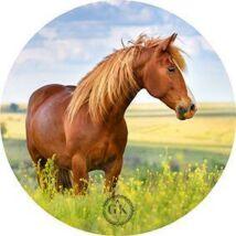 Kócos ló a nyári mezőn tortaostya